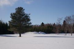 Boom in sneeuw Stock Foto