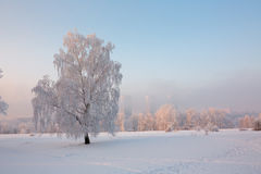 Boom in sneeuw Royalty-vrije Stock Afbeelding