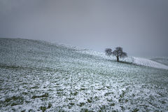 Boom in sneeuw Stock Afbeelding