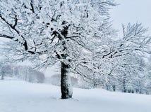 Boom in sneeuw in de winter wordt behandeld die royalty-vrije stock afbeelding