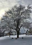 Boom in Sneeuw wordt behandeld die Royalty-vrije Stock Fotografie