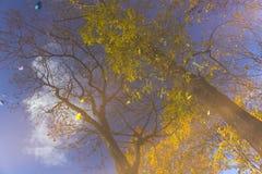 Boom, takken, bladerenbezinning in de vulklei Abstract, artistiek concept stock fotografie
