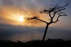 Boom tegen het licht bij zonsondergang over het overzees op Onderstel Jaizkibel Stock Foto's