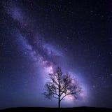Boom tegen Melkweg Het landschap van de nacht Stock Foto