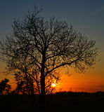 Boom tegen zonsondergang Stock Foto's