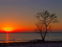 Boom tegen zonsondergang stock afbeelding