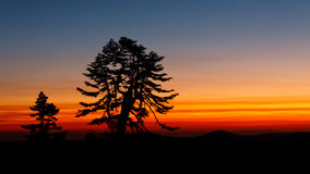 Boom tegen Zonsondergang wordt gesilhouetteerd die Stock Foto