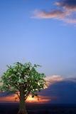 Boom tegen zonsonderganghemel Royalty-vrije Stock Fotografie
