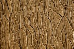 Boom-type textuur op het zandstrand Royalty-vrije Stock Afbeelding