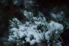 Boom van de Kerstmis de altijdgroene die pijnboom met verse sneeuw wordt behandeld Stock Afbeelding