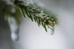 Boom van de Kerstmis de altijdgroene die pijnboom met verse sneeuw wordt behandeld Royalty-vrije Stock Fotografie