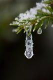 Boom van de Kerstmis de altijdgroene die pijnboom met verse sneeuw wordt behandeld Stock Fotografie