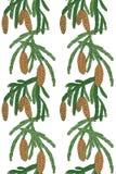 Boom van de patroon de witte pijnboom met denneappels Royalty-vrije Stock Afbeeldingen