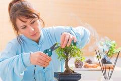 Boom van de vrouwen de in orde makende bonsai royalty-vrije stock afbeelding