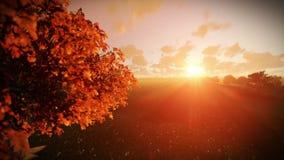 Boom van het leven bij zonsondergang, schuine stand stock videobeelden