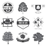 Boom van het Leven Bomen FO lables en banners Royalty-vrije Stock Fotografie