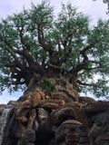 Boom van het Leven in Walt Disney World royalty-vrije stock foto's
