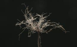 Boom van wortels 6 Royalty-vrije Stock Foto's