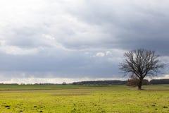 Boom in vlak platteland 3 Stock Afbeeldingen