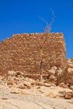 Boom in voorgrond van ruïnes in Masada Stock Afbeeldingen