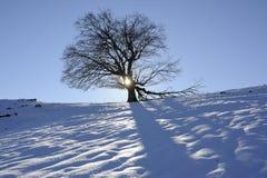Boom in wintertijd Royalty-vrije Stock Afbeelding