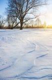 Boom in wintertijd. stock foto