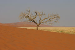 Boom in woestijn Royalty-vrije Stock Afbeeldingen