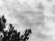 Boom, wolken en vliegtuig stock afbeelding