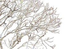 Boom zonder blad vinter zon stock foto's