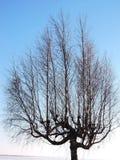 Boom zonder bladeren in de winter, Litouwen Royalty-vrije Stock Afbeeldingen