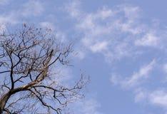 Boom zonder bladeren op de blauwe hemel Royalty-vrije Stock Afbeeldingen