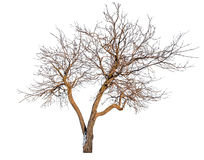 De naakte boom met sneeuw blijft Royalty-vrije Stock Afbeeldingen