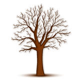 Boom zonder bladerenvector royalty-vrije illustratie