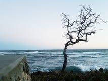 Boom zonder het leven, gekleed door de dalingen van de oceaan royalty-vrije stock fotografie