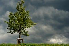 Boom in zonneschijn vóór onweerswolken Stock Afbeeldingen