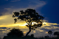 Boom in zonsondergang Stock Afbeeldingen