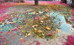 Boombezinning en gevallen bladeren op regenvijver Royalty-vrije Stock Foto's