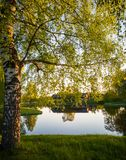 Boombezinning in het Meer op Sunny Spring Day - Autumn Colou Royalty-vrije Stock Foto
