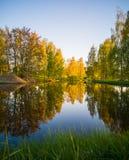 Boombezinning in het Meer op Sunny Spring Day - Autumn Colou Royalty-vrije Stock Fotografie