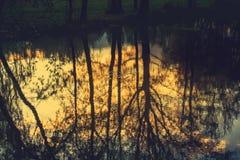 Boombezinning in het water Royalty-vrije Stock Foto's