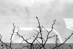 Boombezinning over autoachterruit in de lente in zwart-wit Royalty-vrije Stock Afbeeldingen