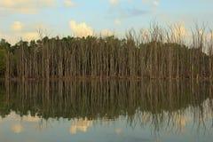 Boombezinning over een meer in Kent County Michigan stock foto