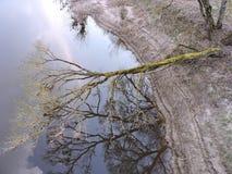Boombezinning in rivierwater Stock Foto