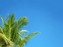 Boomblad in kadermening die die omhoog tegen hemel, Vakantie su kijken Stock Fotografie