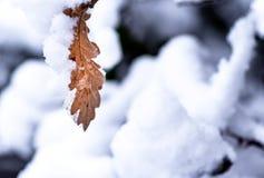 Boomblad met verse sneeuw wordt behandeld die royalty-vrije stock afbeelding