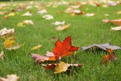 Boombladeren in de herfst Royalty-vrije Stock Foto's