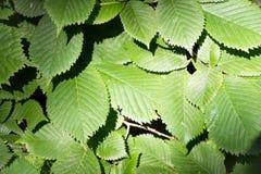 Boombladeren in de schaduw van een boom Stock Foto