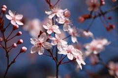Boombloemen in de lente Stock Afbeelding