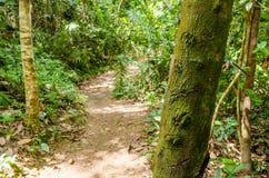 Boomboomstam die met mos in de voorgrond en aan de bodem wordt behandeld een kleine sleep van aarde amid de intense vegetatie royalty-vrije stock fotografie