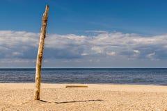 Boomboomstam die uit het zand op het strand plakken stock fotografie
